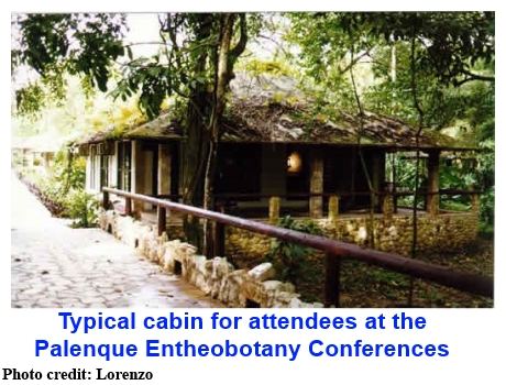 Typical cabin for attendees at the Palenque Entheobotany Conferences